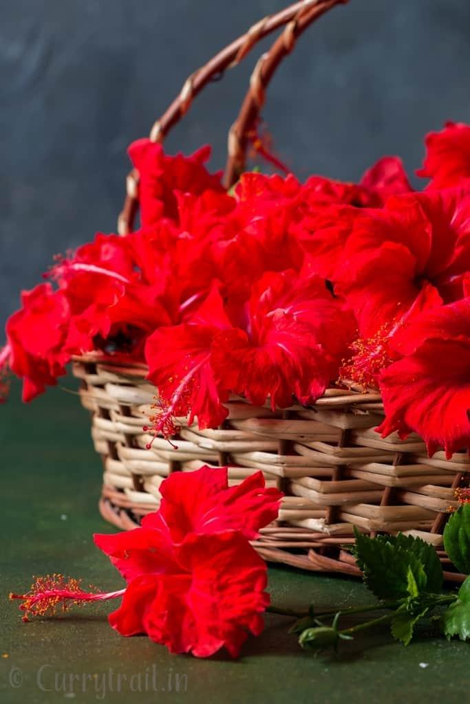 fresh hibiscus flower