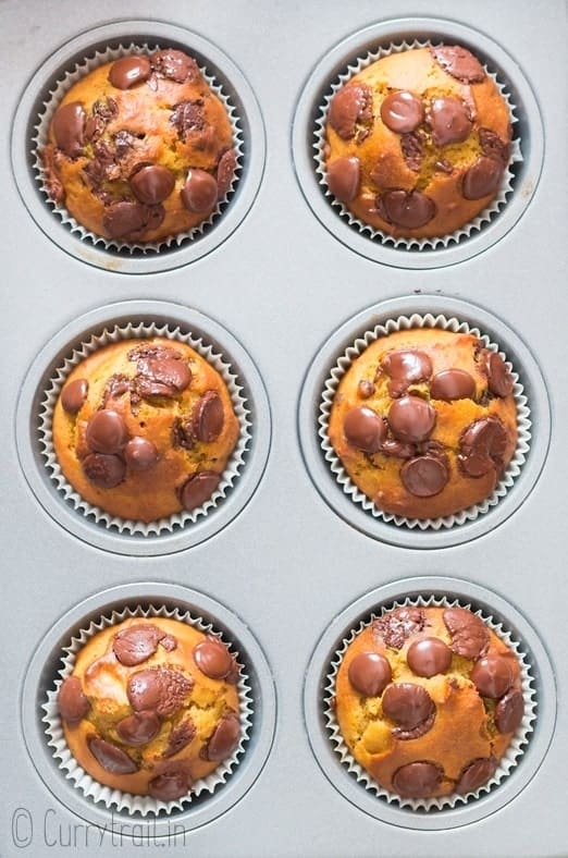 fall pumpkin muffins with choco chips in muffin tin